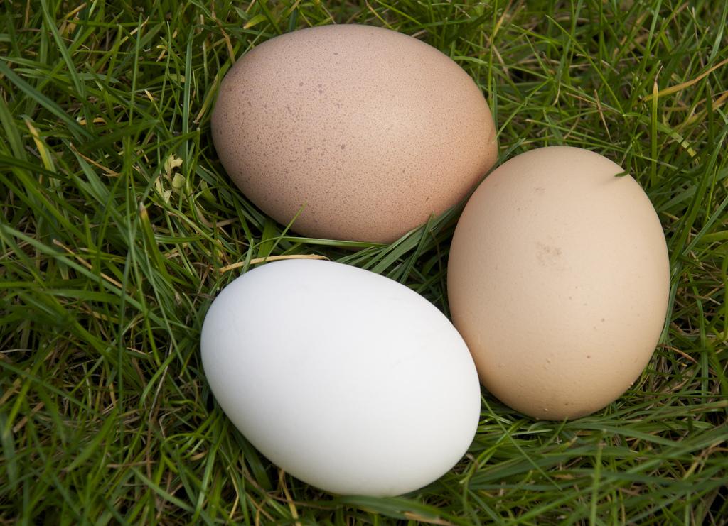 деревенские яица