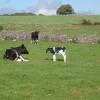 7 популярных вопросов о молоке