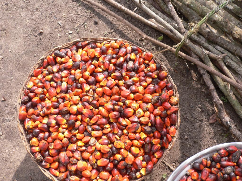 Пальмовое масло получают в Индонезии и Малайзии