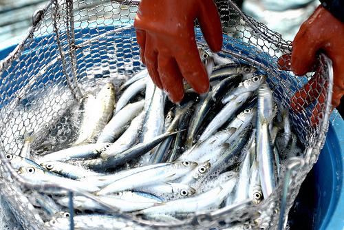 fish_import