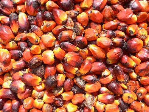 Россия занимает 14-е место в мире по потреблению пальмового масла