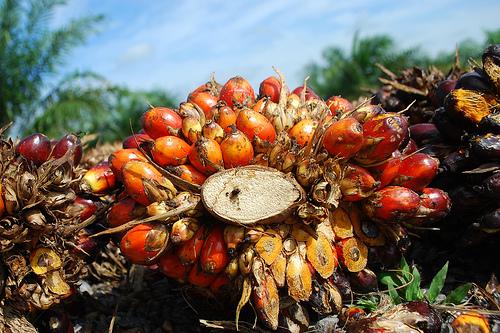 Пальмовое масло – источник пальмитиновой кислоты
