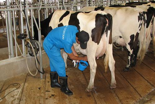 milk_farm